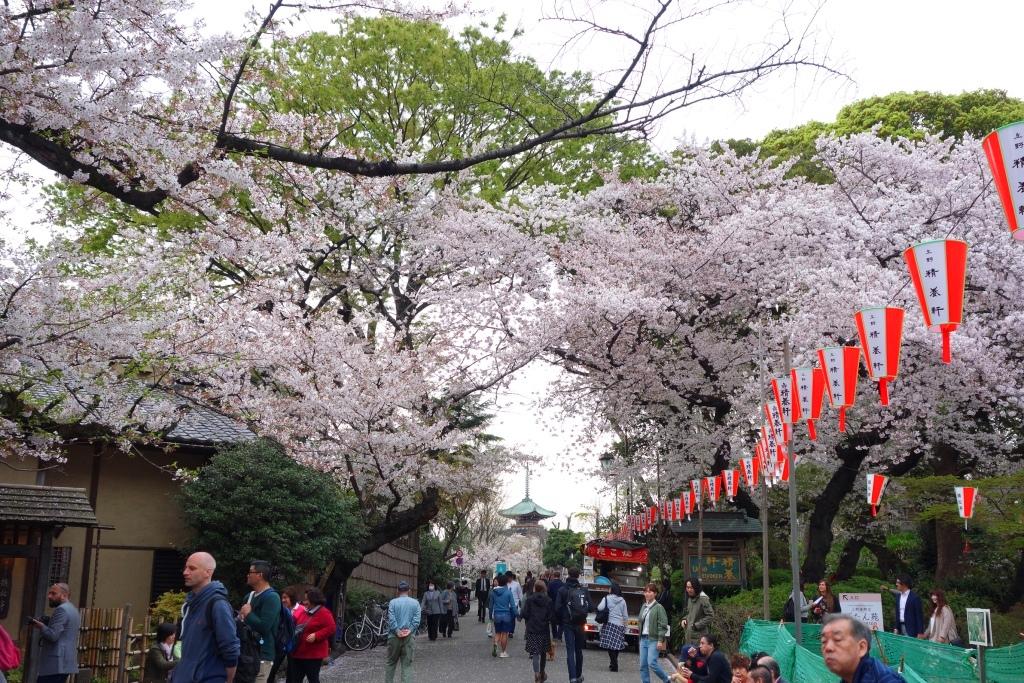 上野公園 桜と寛永寺五重塔
