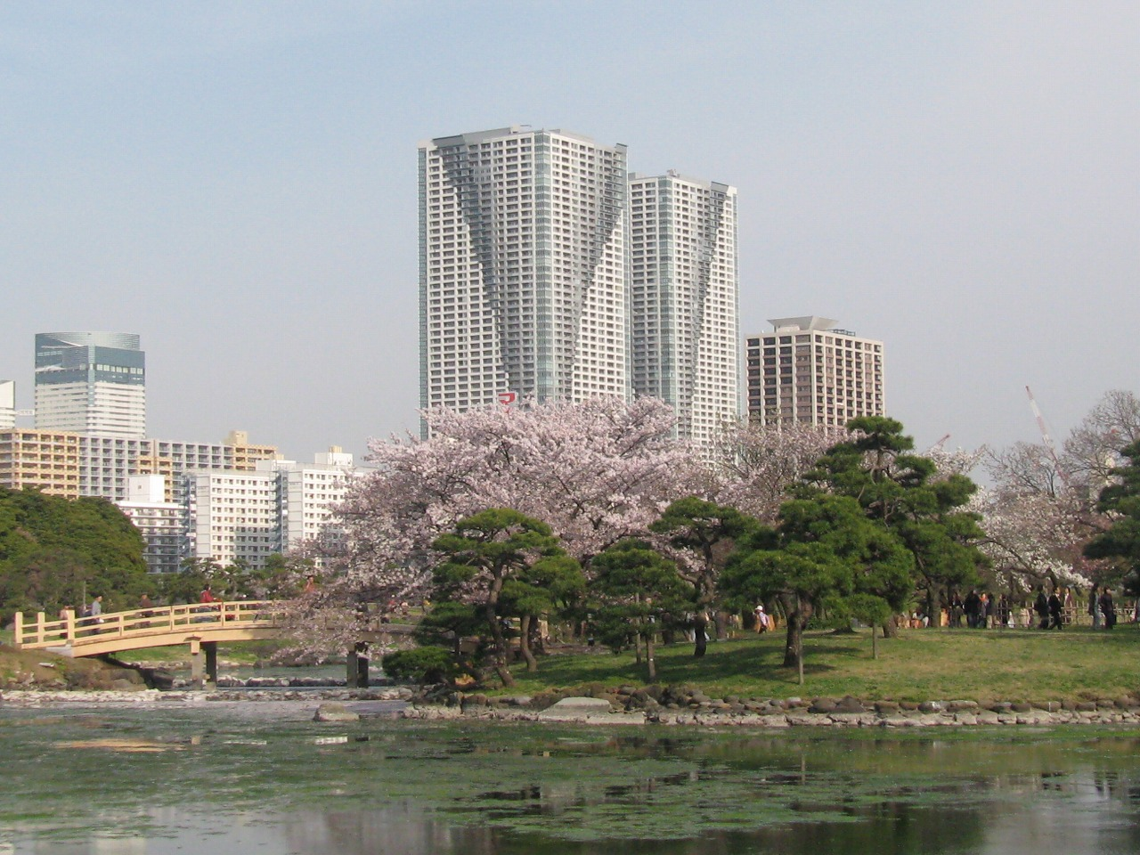 浜離宮公園の桜